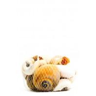 Dekorácia mušle – slimák