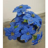 Vianočná ruža modrá